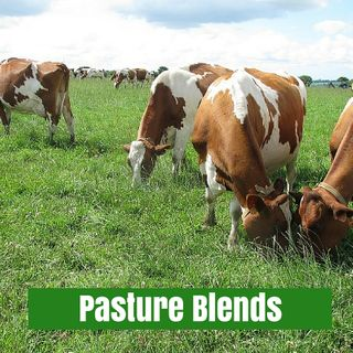 Pasture Seed Blends