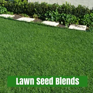 Lawn Seed Blends