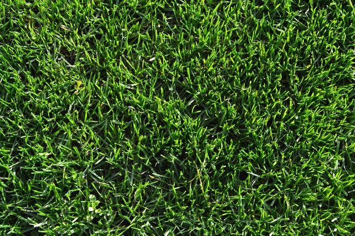 Rapid Green Defiant TTT Ryegrass
