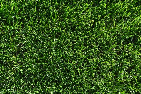 Rapid Green Defiant XRE Tall Fescue
