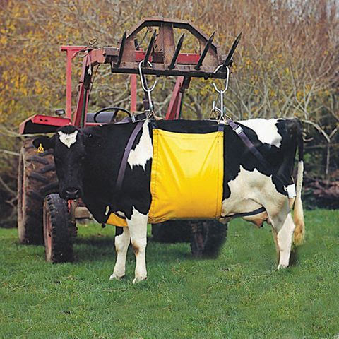 Cow Lifter
