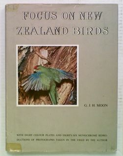 Focus on New Zealand Birds
