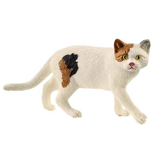 AMERICAN SHORTHAIR CAT 13894