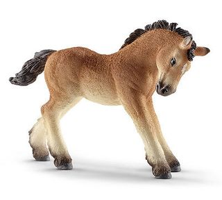 ARDENNES FOAL 13779