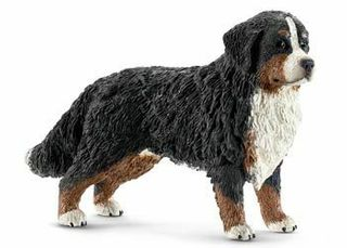 BERNESE MOUNTAIN DOG FEMALE 16397