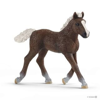 BLACK FOREST FOAL 13899
