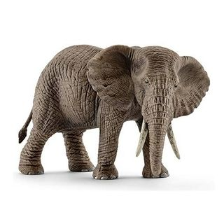 AFRICAN ELEPHANT FEMALE 14761