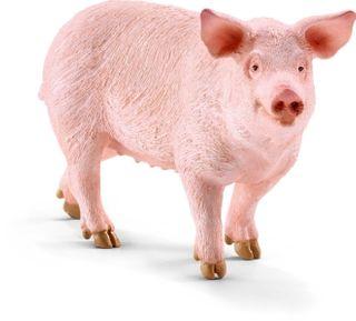 PIG 13782