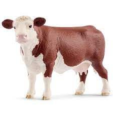 HEREFORD COW 13867