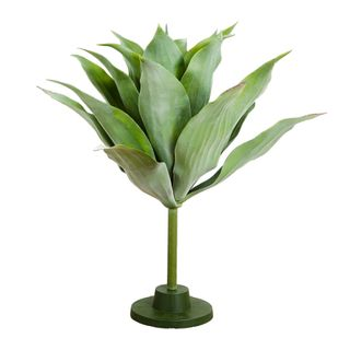 Giant Agave Plant 75cm