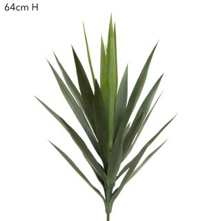 Yucca Head 64cm Unpotted Green