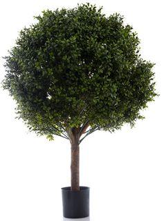 Boxwood Ball Tree 85cm (Dia 70cm)