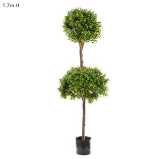 Boxwood Dbl Ball Tree 1.7m Dia60&40cm