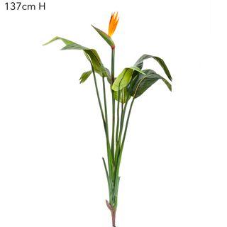 Bird Of Paradise 137cm W/7 Lvs 1 Flr