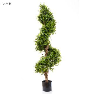 Boxwood Spiral Tree Budget 1.4m