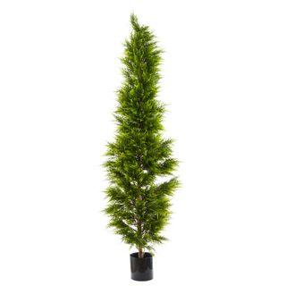 Cypress Pine 2m
