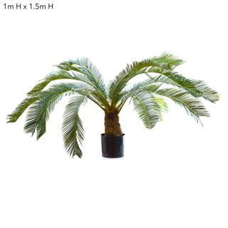 Cycus Palm 1m W/15 Fronds