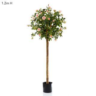Diamond Rose Ball Tree 1.2m Pink
