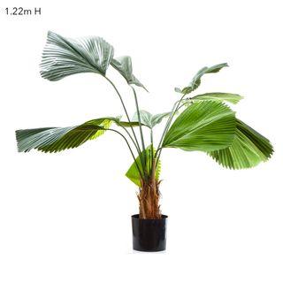 Fan Palm 1.22m W/10 Leaves