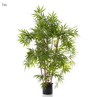 Japanese Bamboo Tree 1m