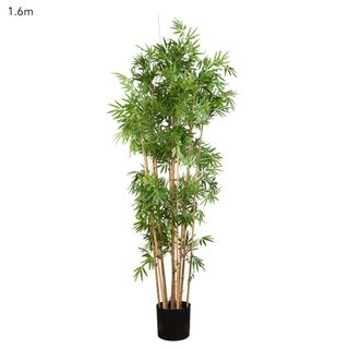 Japanese Bamboo Tree 1.6m
