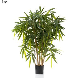 New Bamboo Tree 1m