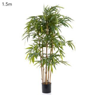 New Bamboo Tree 1.5m