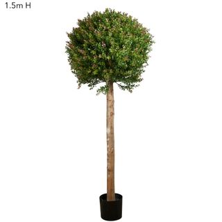 Red Day Leaf Ball Tree 1.5m