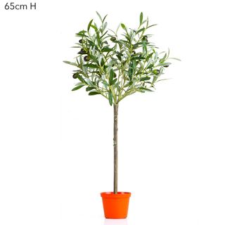 Olive Topiary 65cm W/312 Lvs 18 F