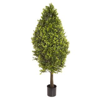 Boxwood Cone W/2160 Lvs 90cm