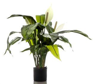 Spathiphyllum Lily 63cm White