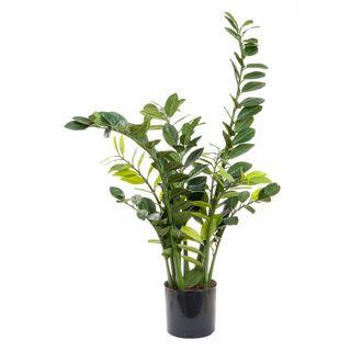Smargago Plant x 7 1.1m