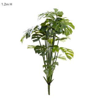 Split-Leaf Philodendron 1.2m No pot