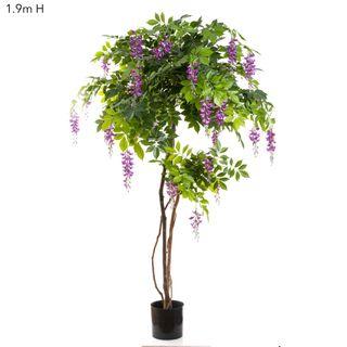 Wisteria Tree 1.9m Purple