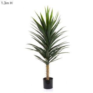Yucca Plant W/102 Lvs 1.3m