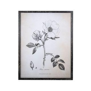 Sepia Rose Framed 54x42x2