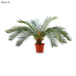 Cycad Palm 45cm W/13 Fronds