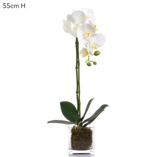 Phal Orchid in Square Glass Vase White