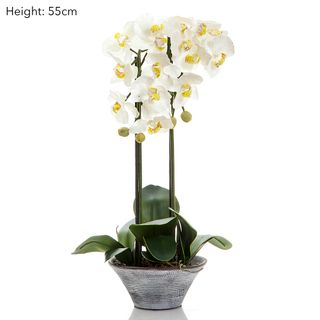 Phalaenopsis in Black Pot - White