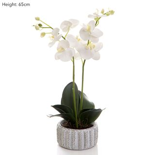 Phalaenopsis in Wht Ceramic Pot Wht