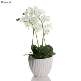Orchid in White Pot White