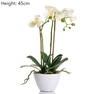 Orchid in Wht Ceramic Pot White