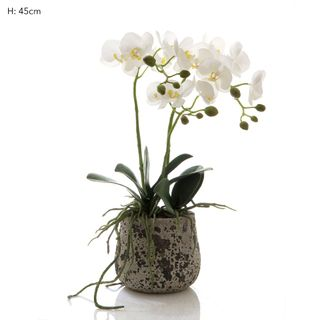 Orchid in Ceramic Pot White