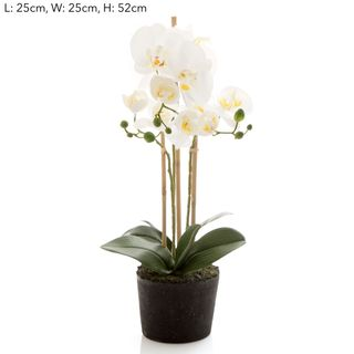 Orchid in Paper Pot Sm White