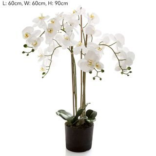 Orchid in Paper Pot Med White