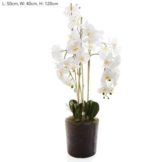 Orchid in Paper Pot Lge White