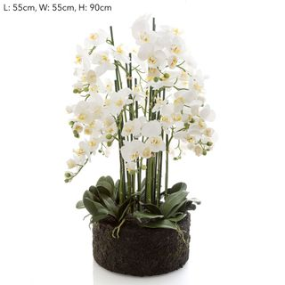 Orchid in Paper Pot XL White