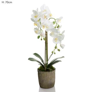Orchid in Terracotta Pot White