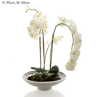 Orchid Phalaenopsis in White Pot White