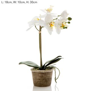 Orchid in Grey Stone Pot Sm White